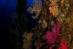 Chaouen-Gorgones-jaunes-et-rouges00